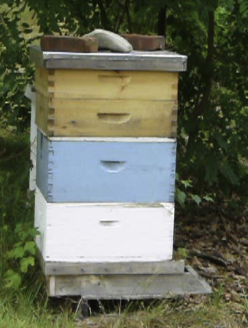 A Typical Beehive atop bottom board and hive stand w/2 each of brood and honey supers. Weight on top outer cover.
